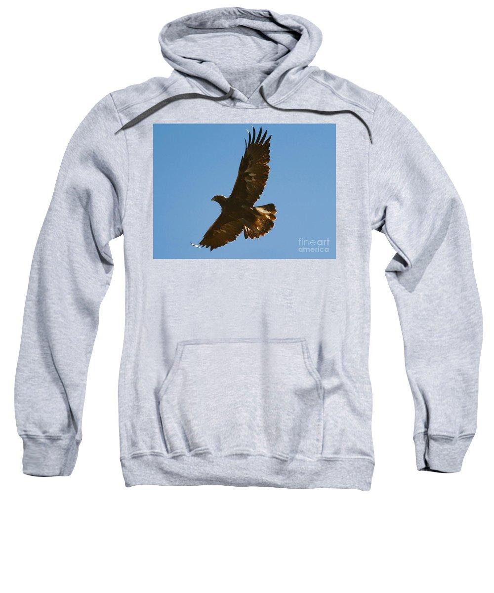 Hawk Sweatshirt featuring the photograph Hawk In Flight by David Lee Thompson