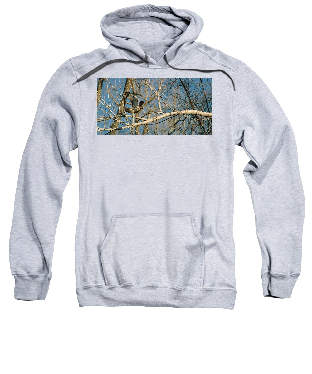 Hawk Sweatshirt featuring the photograph Hawk by Steve Karol