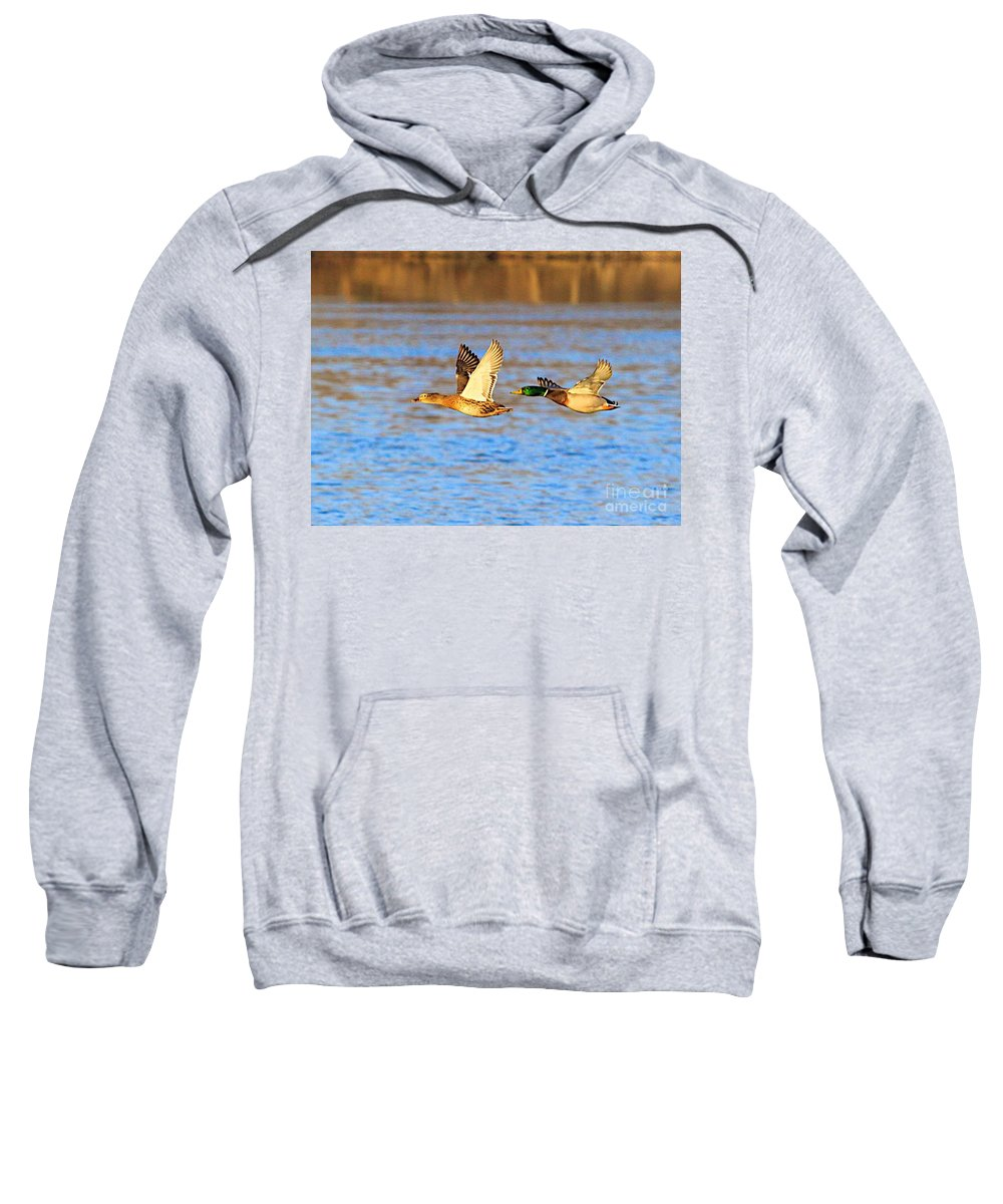 Bird Duck Water Flying Sweatshirt featuring the photograph Headin Out by Robert Pearson