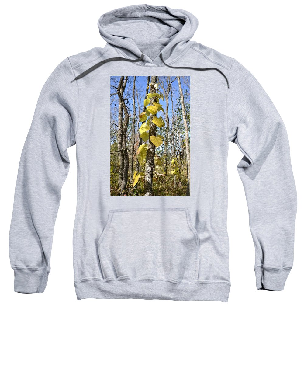 Leaves Sweatshirt featuring the photograph Heart Shaped Leaves Wrapped Around A Tree by Nicole Frederick