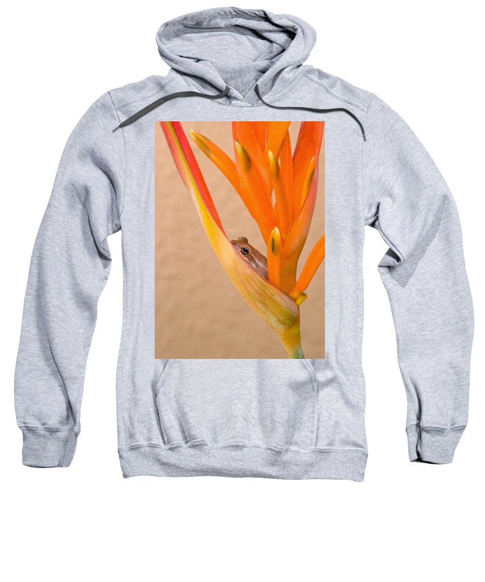 Frog Sweatshirt featuring the photograph Heliconia And Frog by Steven Sparks