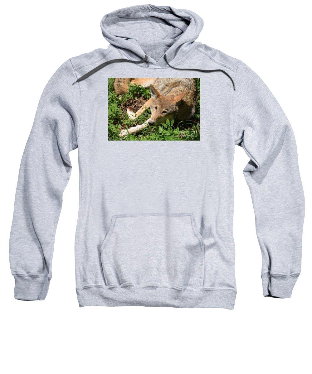 Wolf Sweatshirt featuring the photograph Hello Wolf by Jennifer Craft
