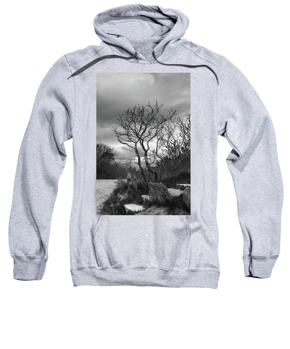 Tree Sweatshirt featuring the photograph Hermit Island Tree 0912 by Guy Whiteley