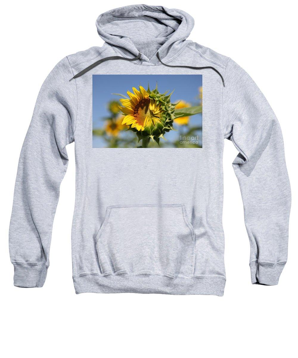 Sunflowers Sweatshirt featuring the photograph Hesitant by Amanda Barcon