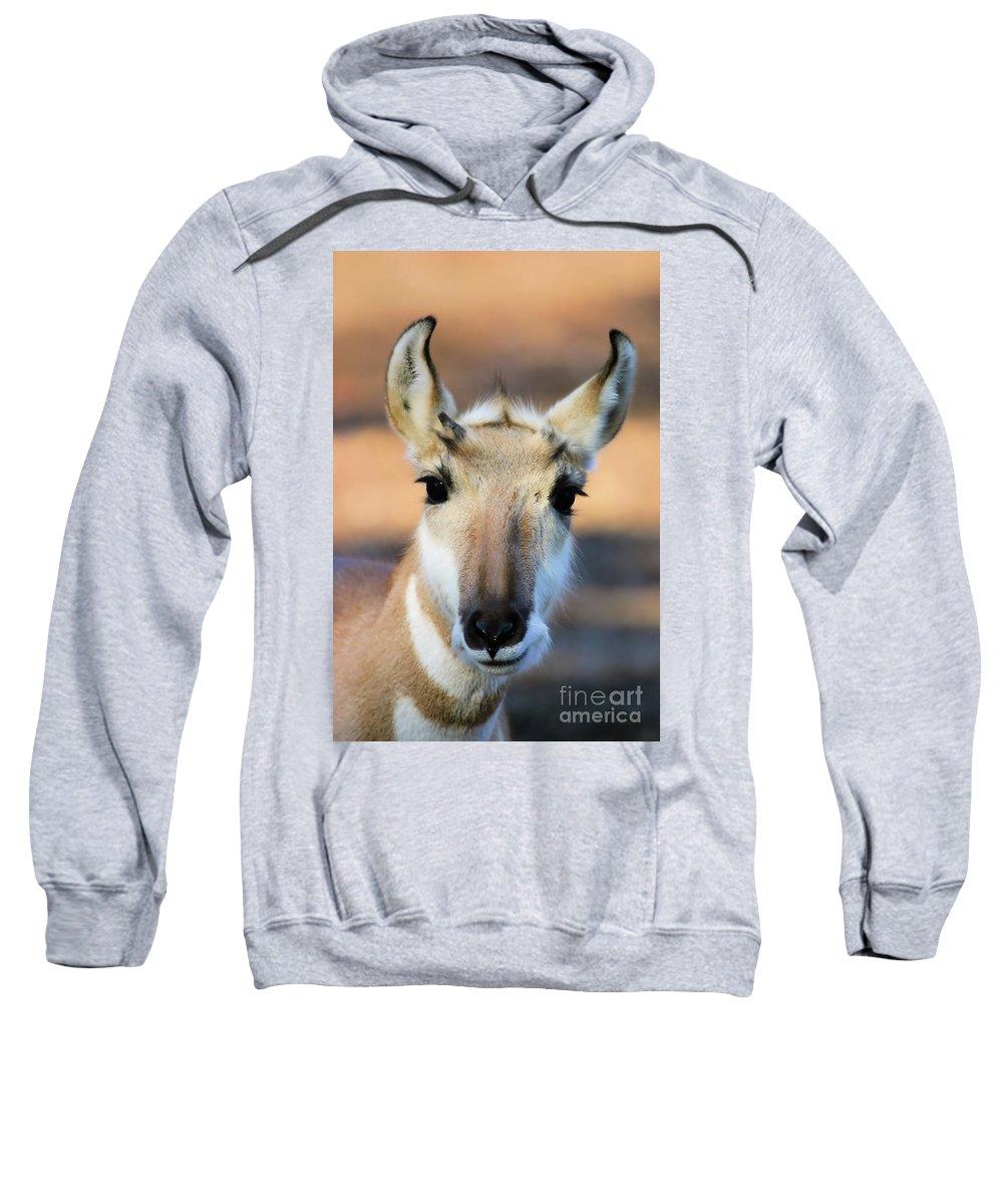 Animal Sweatshirt featuring the photograph Hey You by Karol Livote