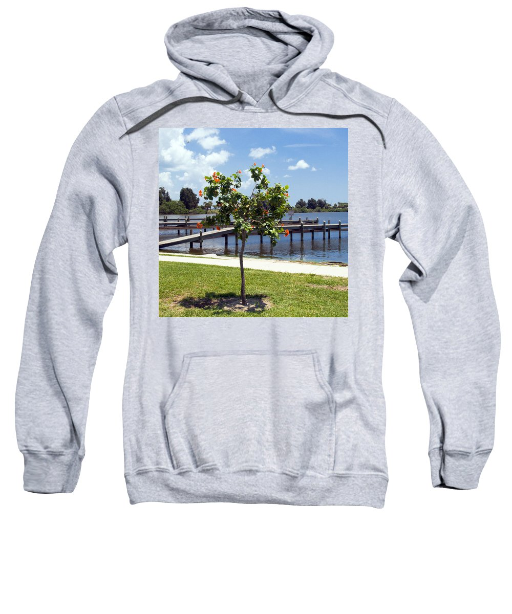 Hibiscus; Rosasinensis; Rosa; Sinensis; Rosa-sinensis; Tree; Bush; Shrub; Plant; Flower; Flowers; Fl Sweatshirt featuring the photograph Hibiscus Rosasinensis With Fruit On The Indian River In Florida by Allan Hughes