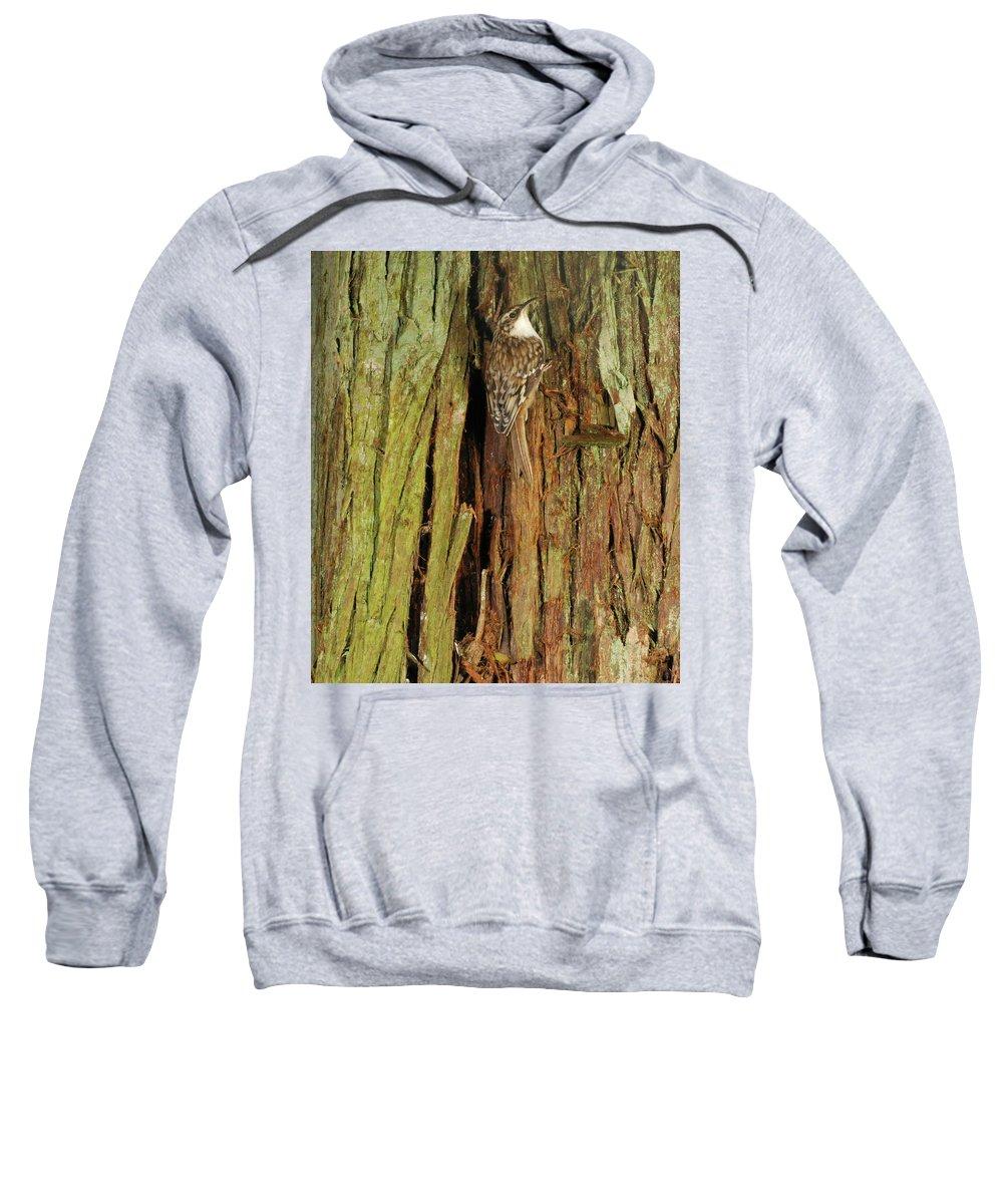 Portrait Sweatshirt featuring the photograph Hidden On The Tree by Damon Calderwood
