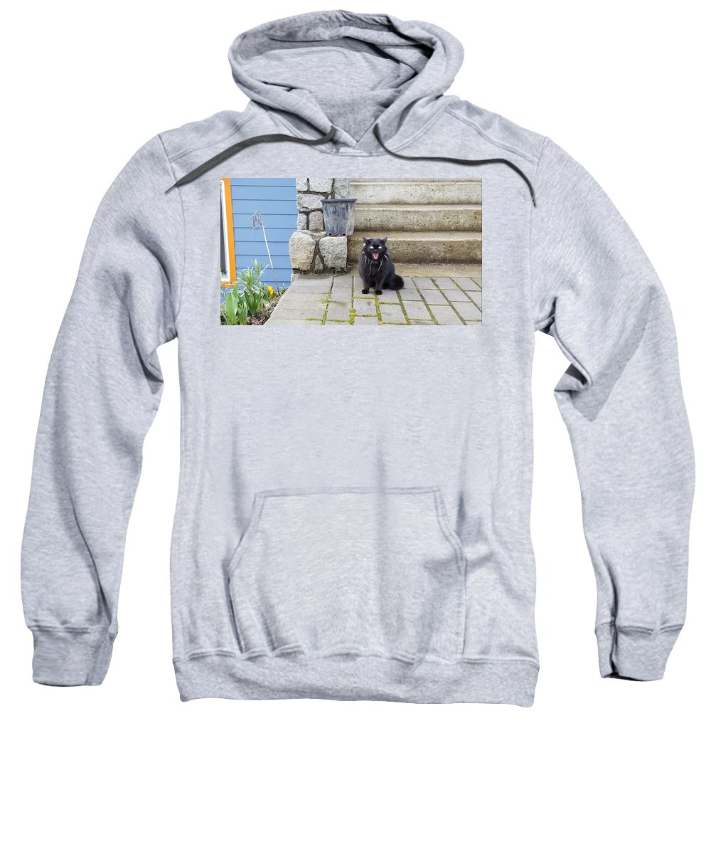 Cat Sweatshirt featuring the painting Hissing Cat by Michael Madi