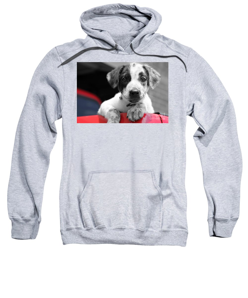 Dogs Sweatshirt featuring the photograph Hmmm by Amanda Barcon