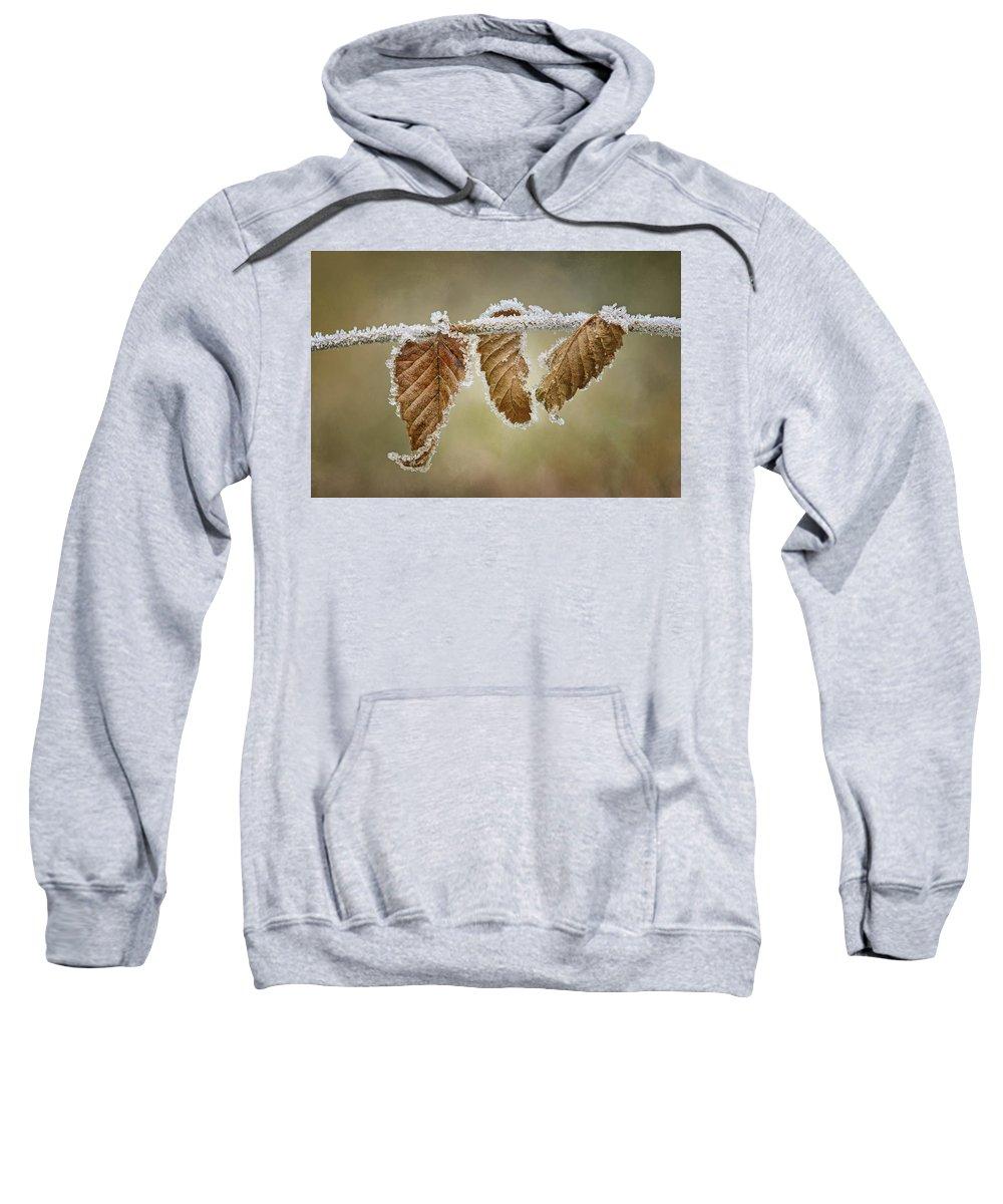 Frost Sweatshirts