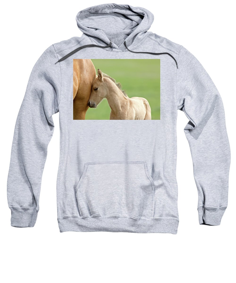 Horse Sweatshirt featuring the digital art Horse And Colt by Mark Duffy