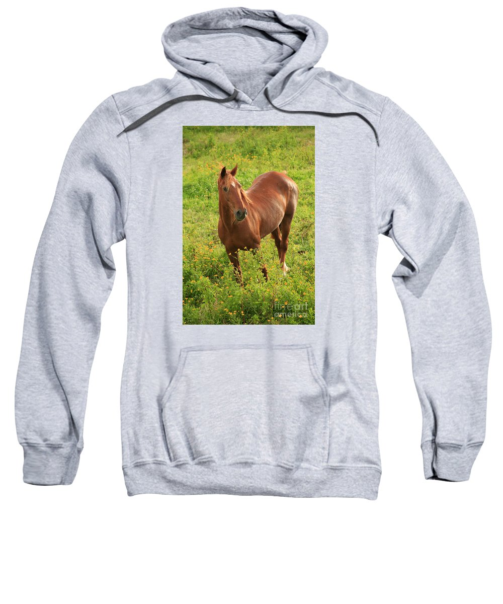 Animals Sweatshirt featuring the photograph Horse In A Field With Flowers by Gaspar Avila