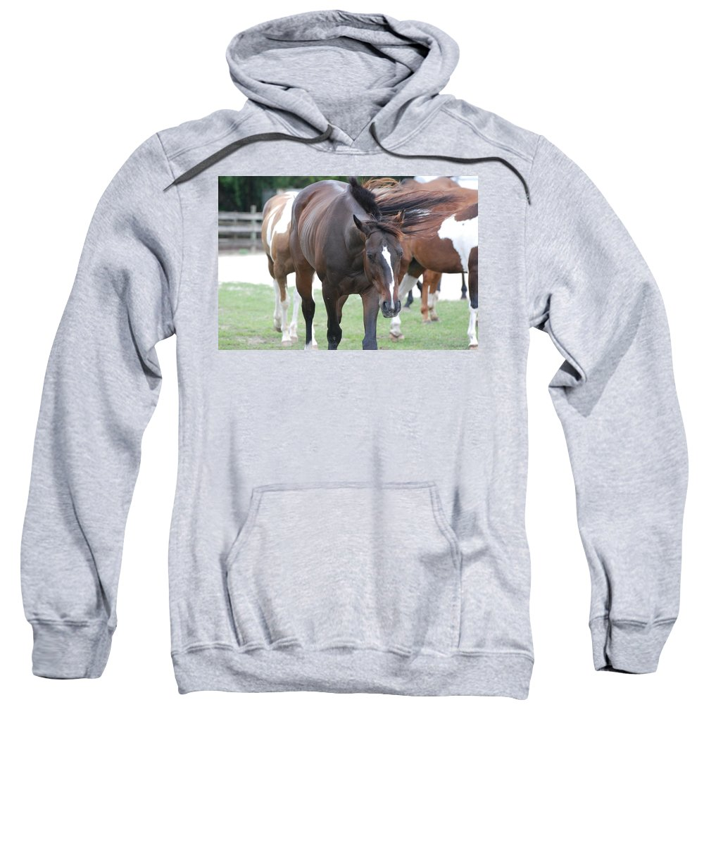 Horses Sweatshirt featuring the photograph Horses by Rob Hans