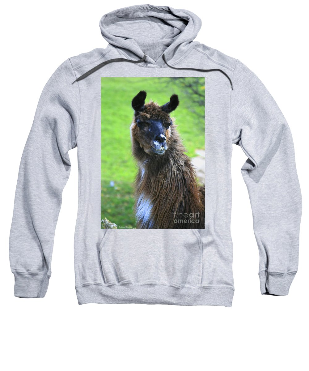 Lama Sweatshirt featuring the photograph How Do I Look by Deborah Benoit