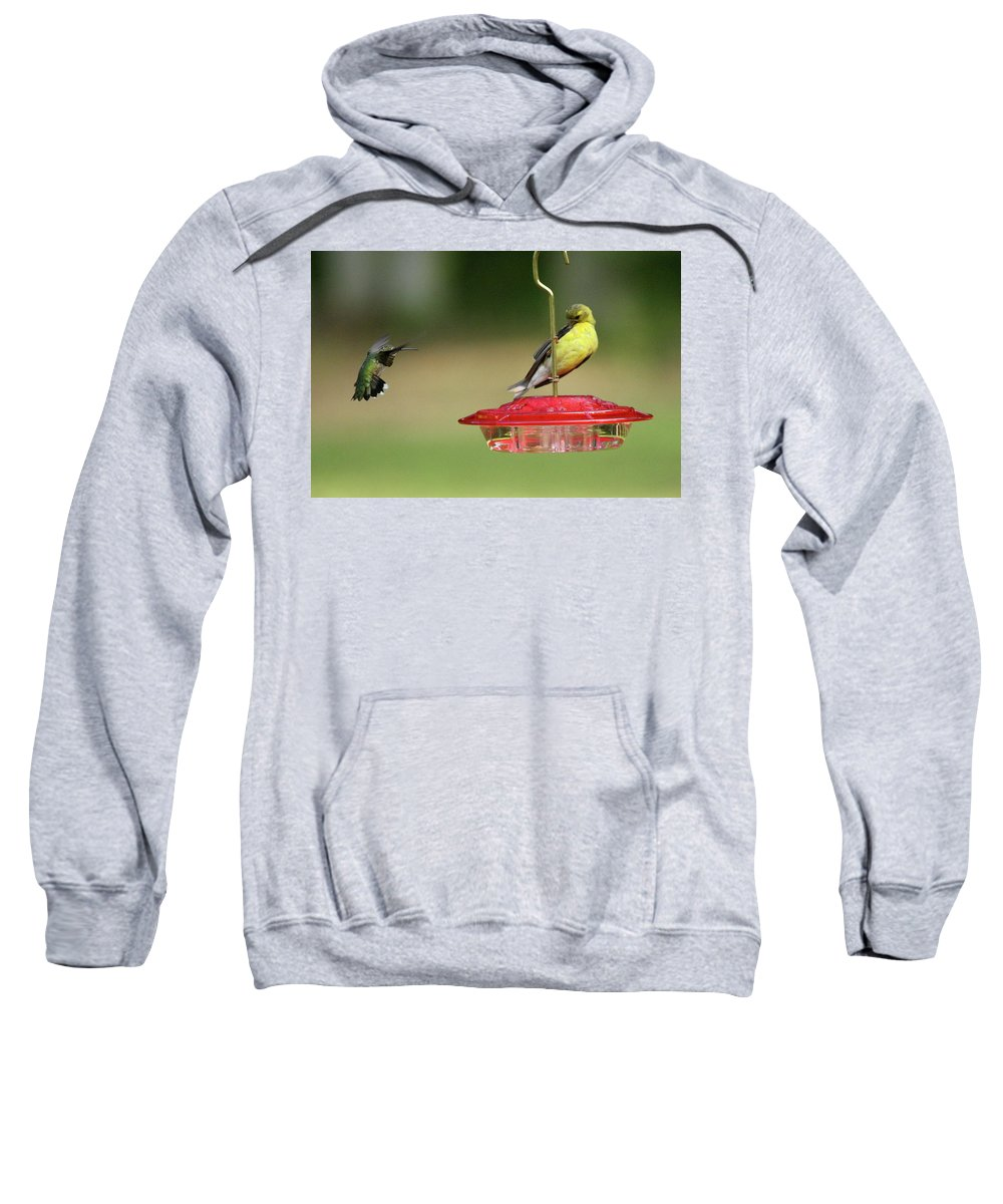 Bird Sweatshirt featuring the photograph Hummer Vs. Finch 1 by Lou Ford