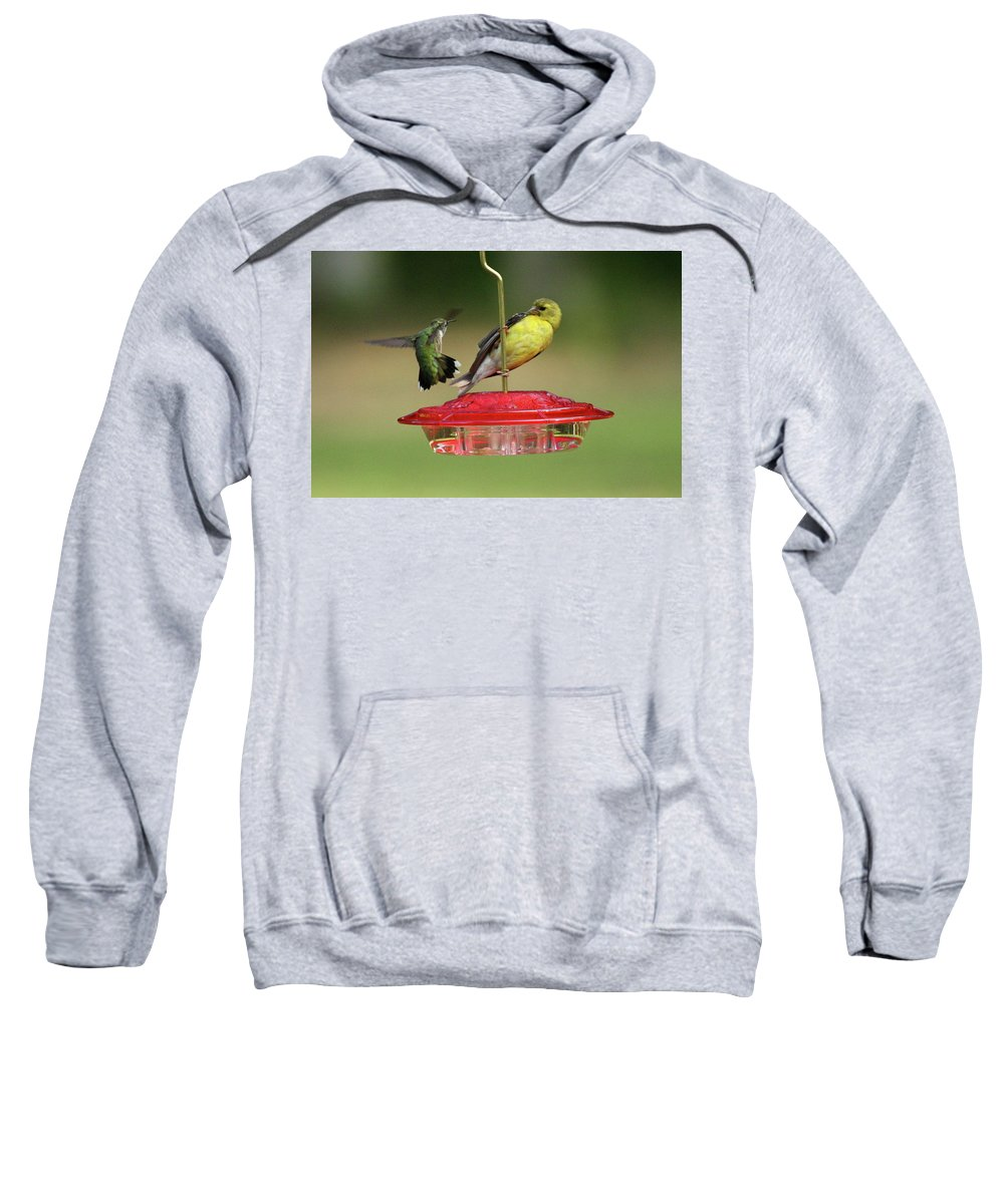 Bird Sweatshirt featuring the photograph Hummer Vs. Finch 2 by Lou Ford