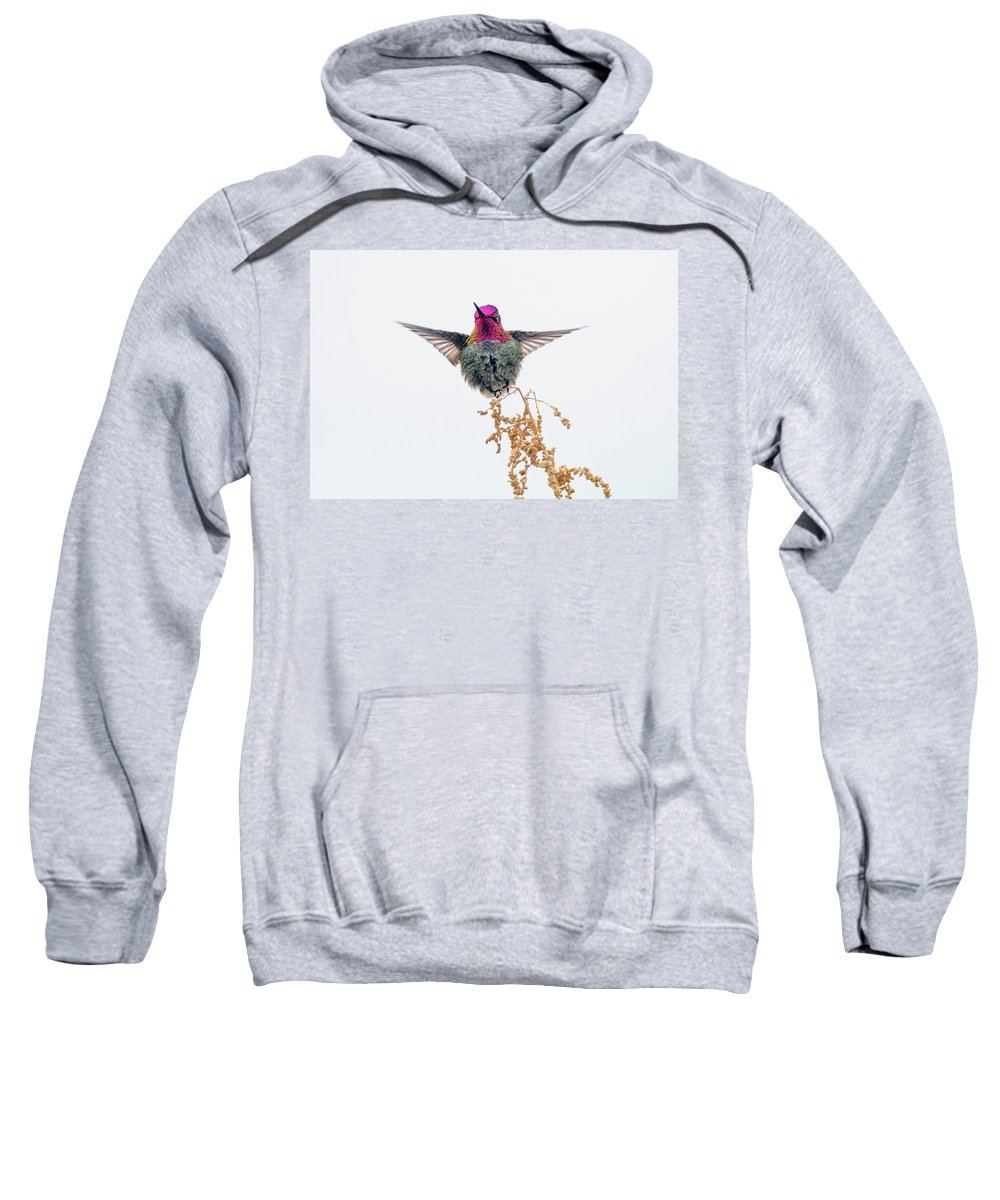 Anna's Sweatshirt featuring the photograph Hummingbird 7445-021418-1cr by Tam Ryan