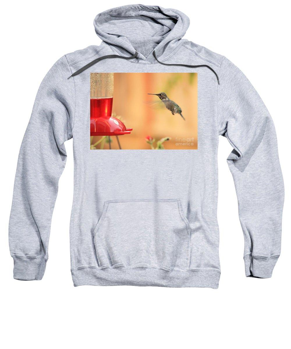 Hummingbird Sweatshirt featuring the photograph Hummingbird And Feeder by Carol Groenen