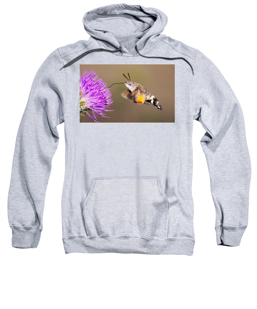 Macroglossum Stellatarum Sweatshirt featuring the photograph Hummingbird Hawk-moth by Mircea Costina Photography
