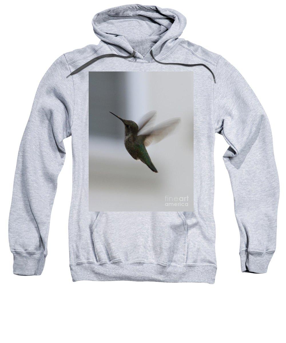 Hummingbird Sweatshirt featuring the photograph Hummingbird In Flight by Carol Groenen