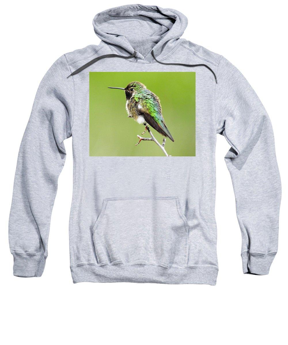 Humming Sweatshirt featuring the photograph Hummingbird by Nicole Belvill