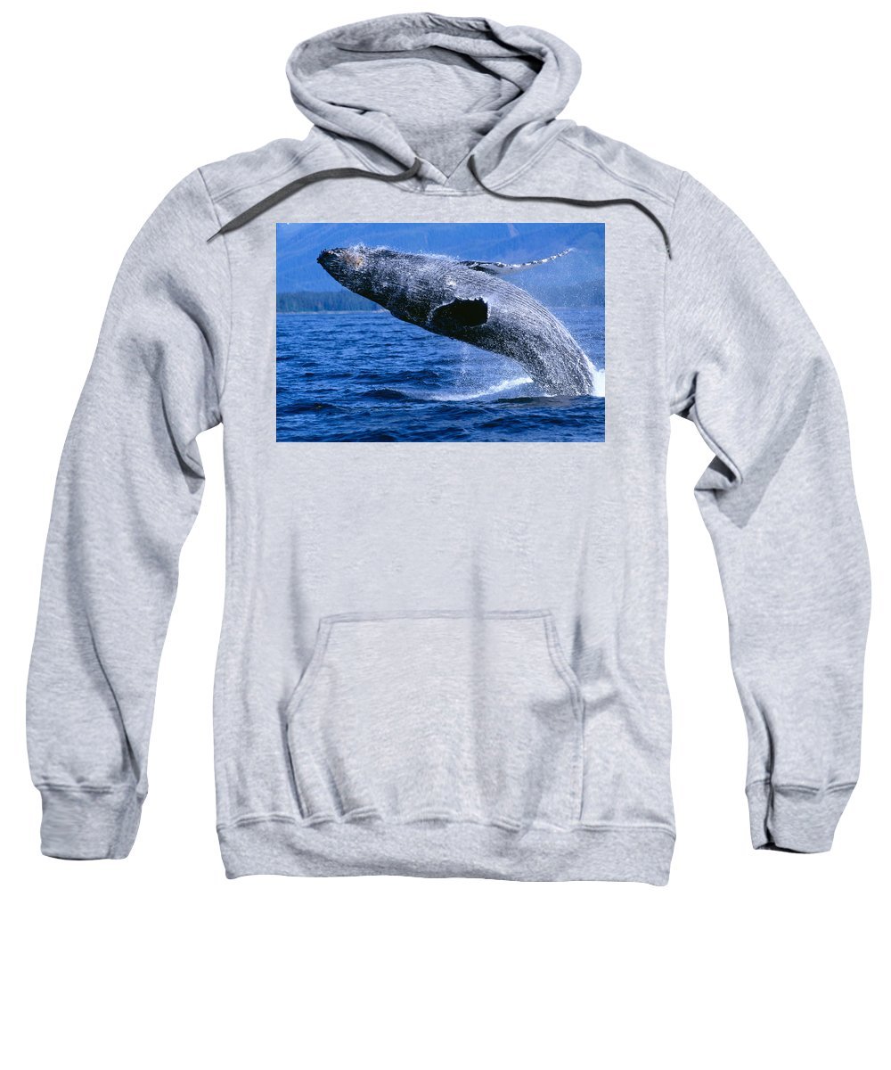 Animal Art Sweatshirt featuring the photograph Humpback Full Breach by John Hyde - Printscapes