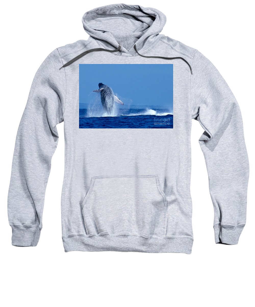 Animal Art Sweatshirt featuring the photograph Humpback Whale Breaching by Ed Robinson - Printscapes