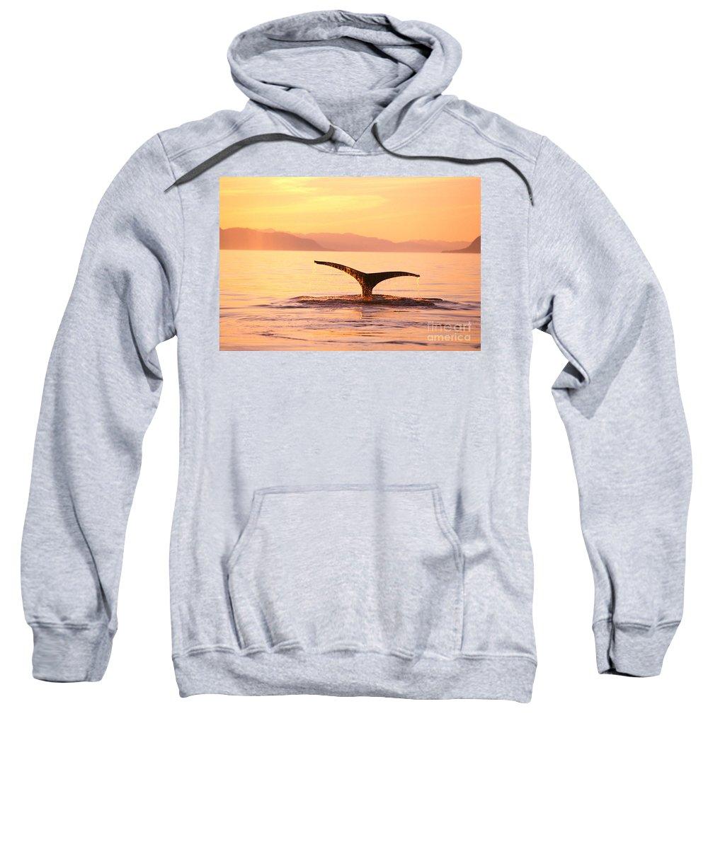 Alaska Sweatshirt featuring the photograph Humpback Whale Fluke by John Hyde - Printscapes