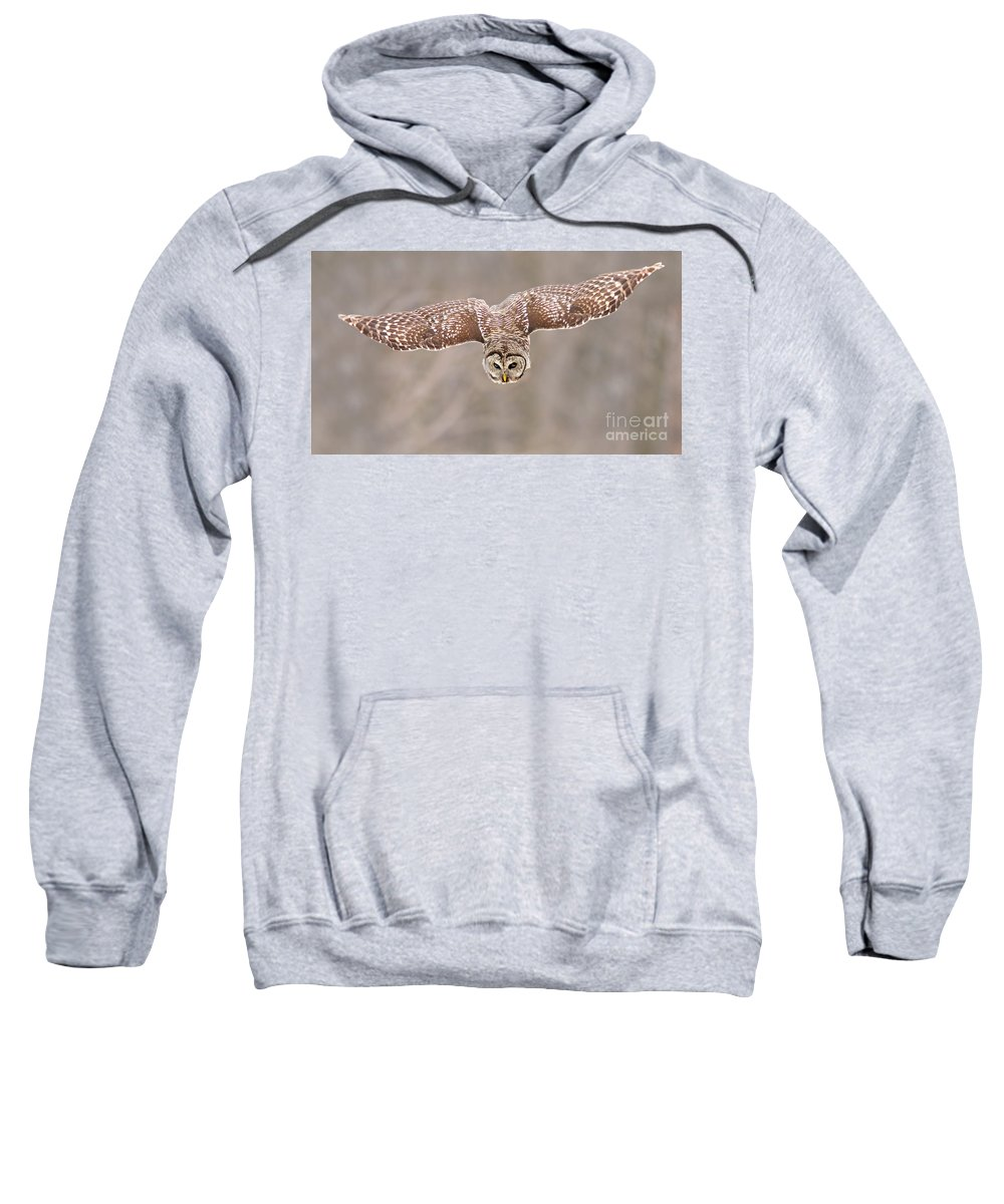 Wild Sweatshirt featuring the photograph Hunting Barred Owl by Mircea Costina Photography