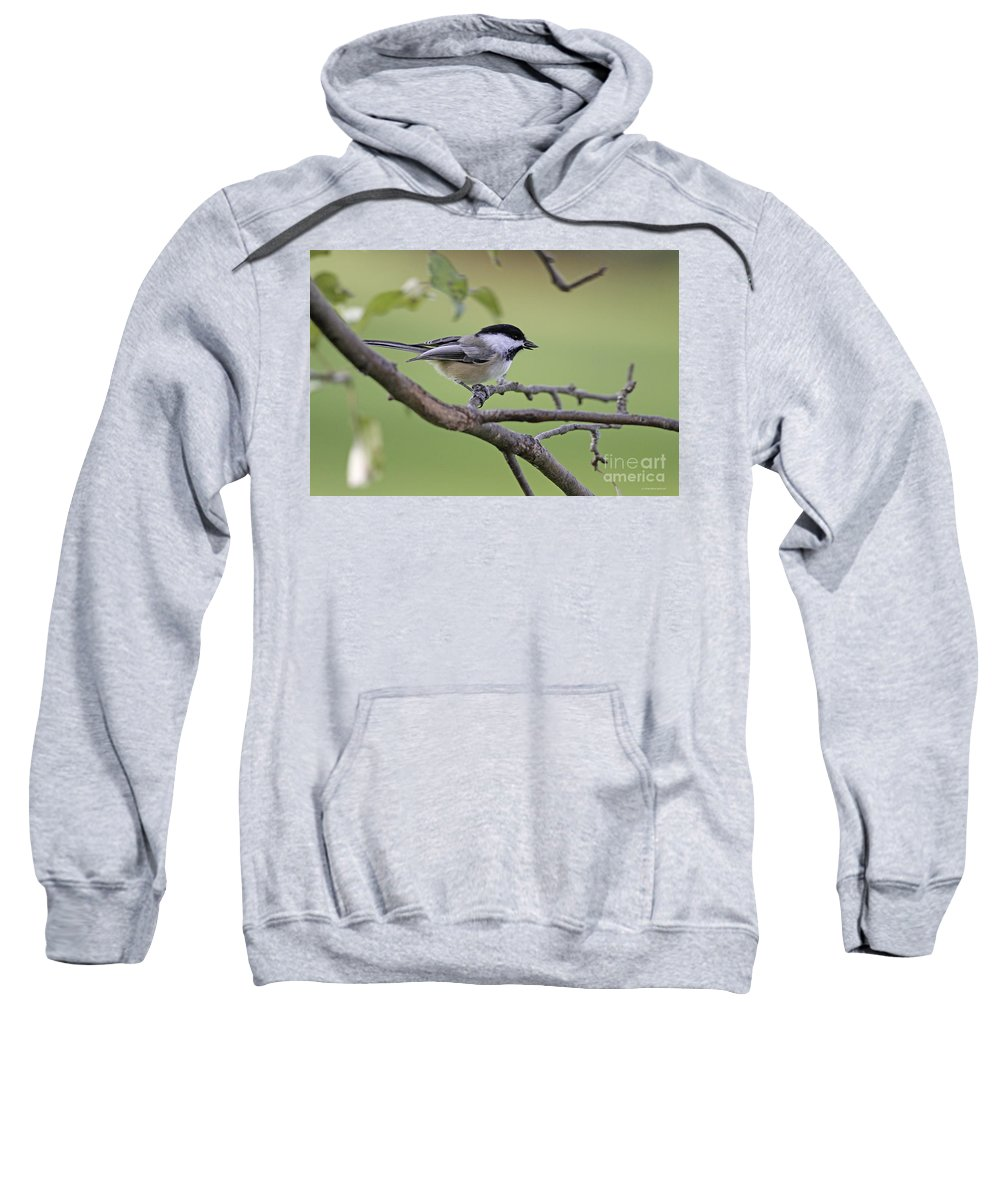 Chickadee Sweatshirt featuring the photograph I Have The Prize by Deborah Benoit