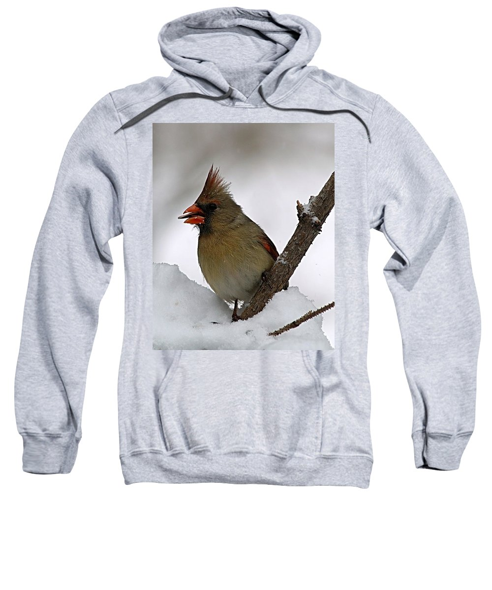 Bird Sweatshirt featuring the photograph I Love Seeds by Gaby Swanson