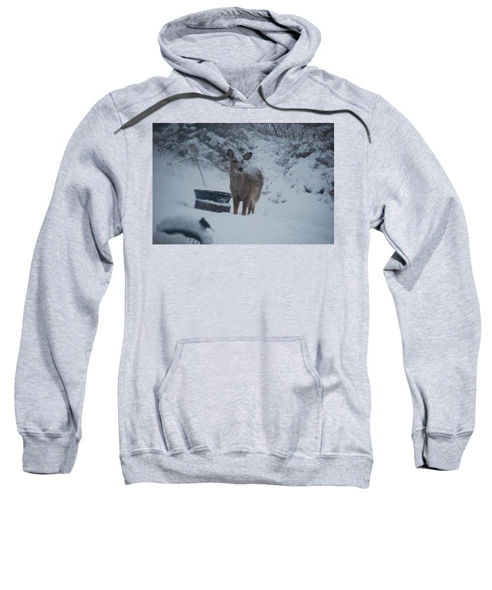 Deer Sweatshirt featuring the photograph I Love Snow by Lori Tambakis