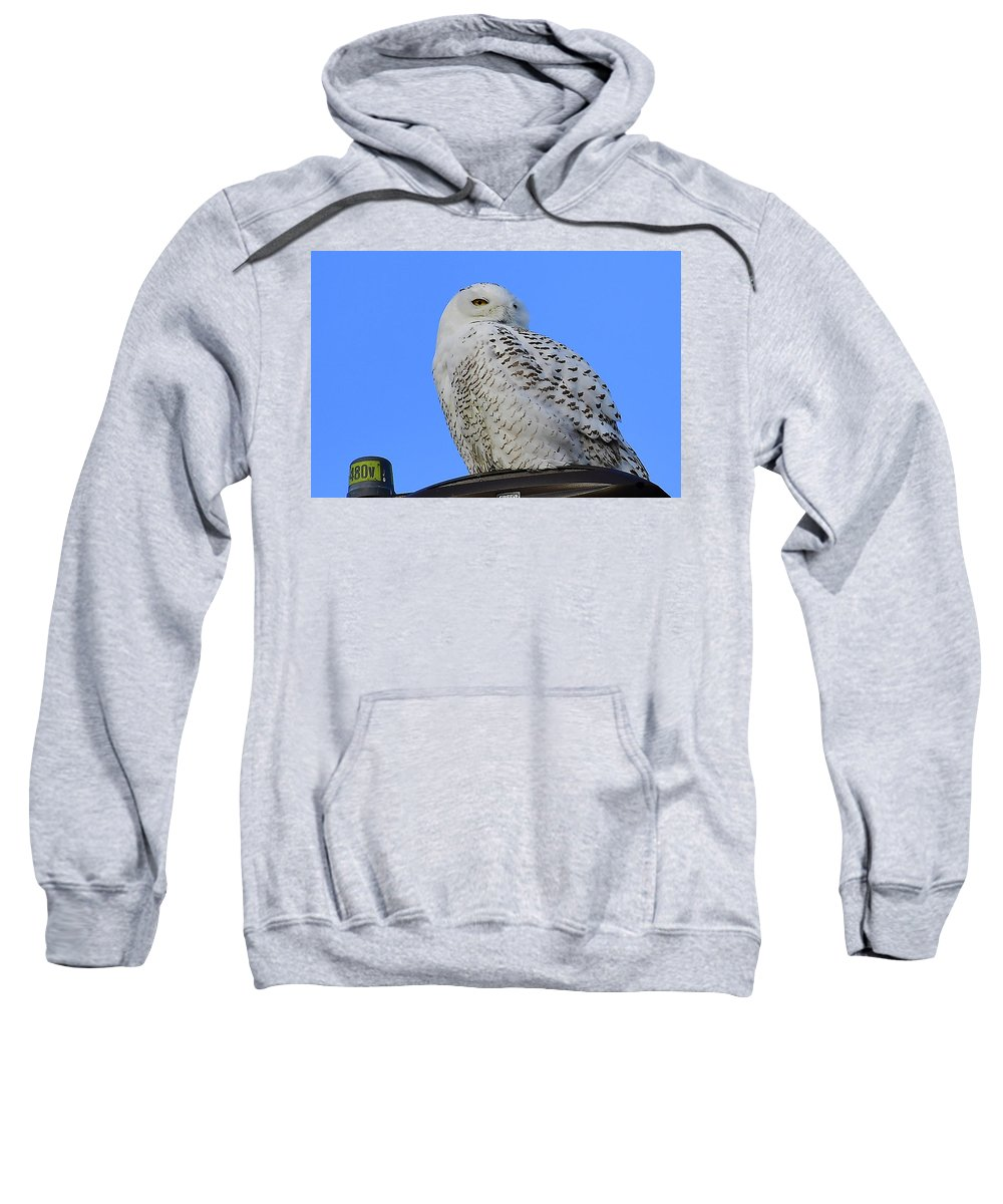 Snowy Owl Sweatshirt featuring the photograph I See You by Mark Madion