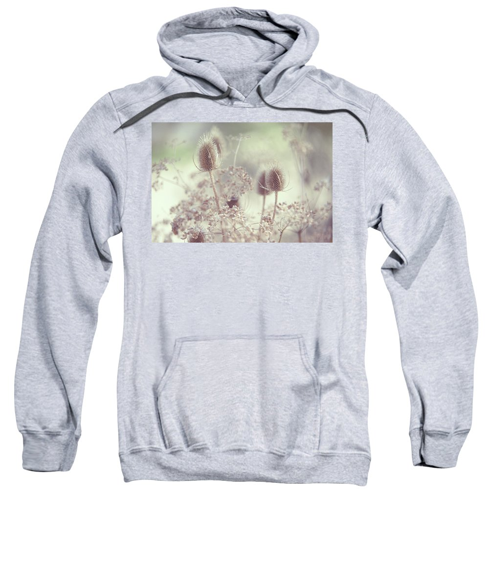 Grass Sweatshirt featuring the photograph Icy Morning. Wild Grass by Jenny Rainbow