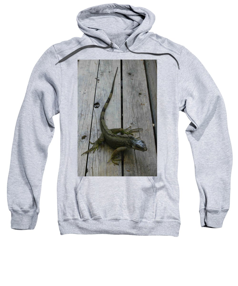 Iguana Sweatshirt featuring the photograph Iguana At The Ready by Tammy Hankins
