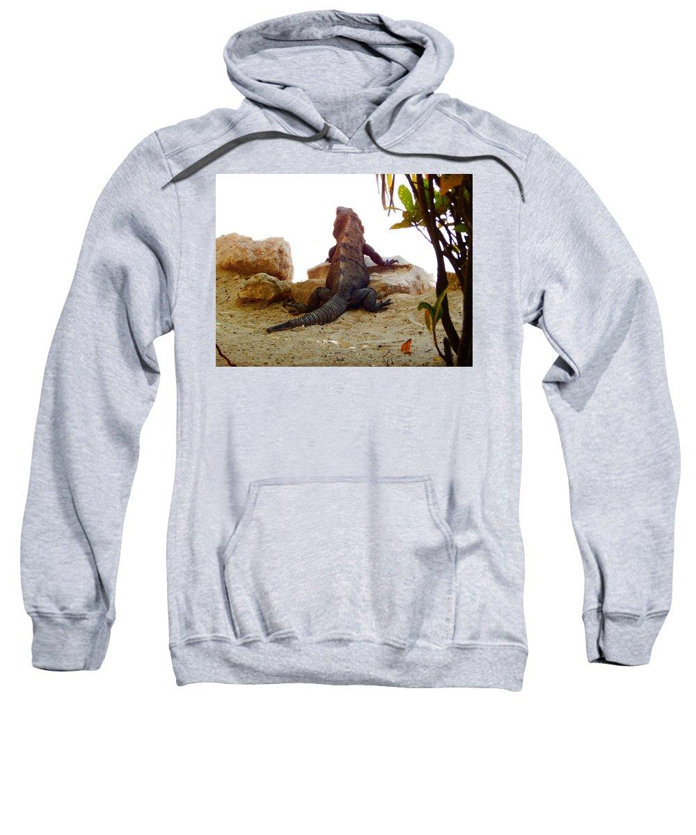 Iguana Sweatshirt featuring the photograph Iguana Watchout by Virginia Kay White