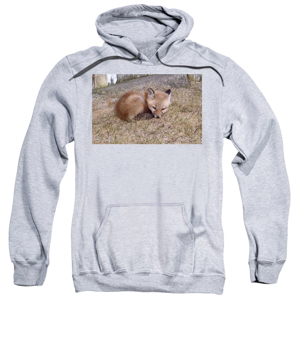 Fox Sweatshirt featuring the photograph I'll Wait Here For Mom by Maureen Beaudet