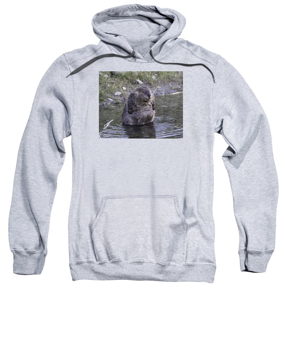 Tetons Sweatshirt featuring the photograph Im Not Fat Im Fluffy by Elizabeth Eldridge