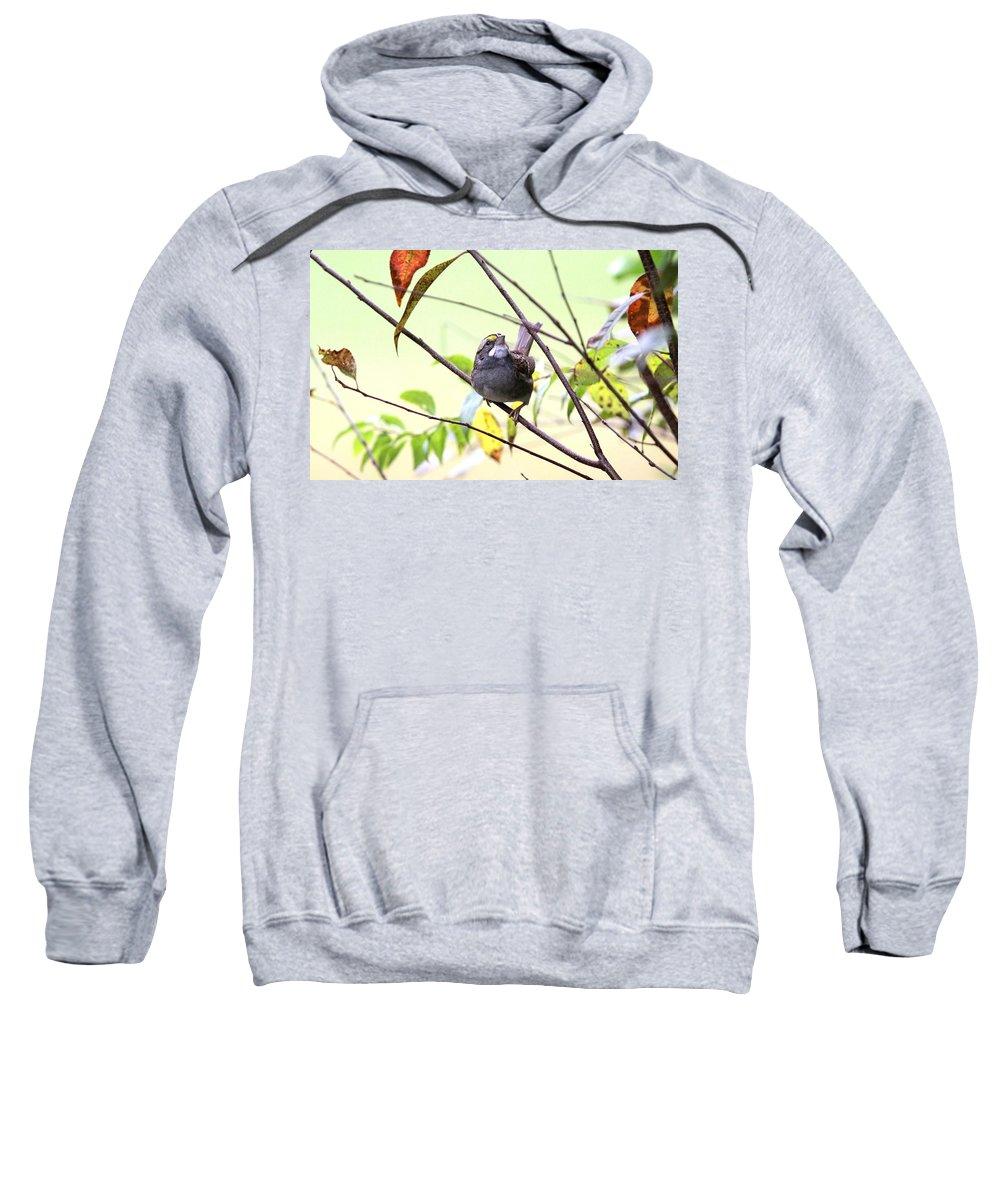 White-throated Sparrow Sweatshirt featuring the photograph Img_7541-002 - White-throated Sparrow by Travis Truelove