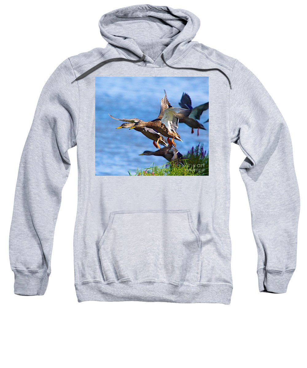 Bird Duck Water Flying Sweatshirt featuring the photograph In A Rush by Robert Pearson