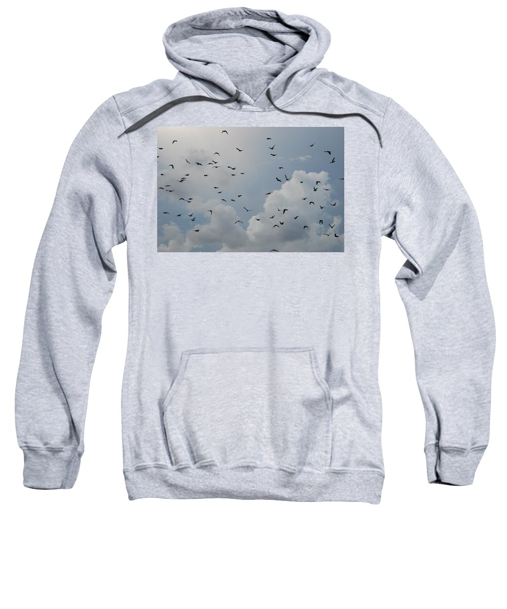 Birds Sweatshirt featuring the photograph In Flight by Rob Hans
