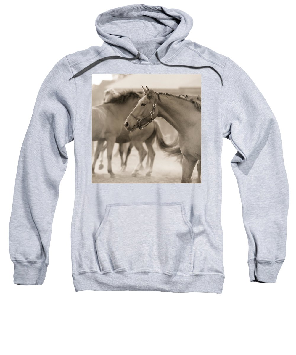 Horses Sweatshirt featuring the photograph In The Dust by Angel Tarantella