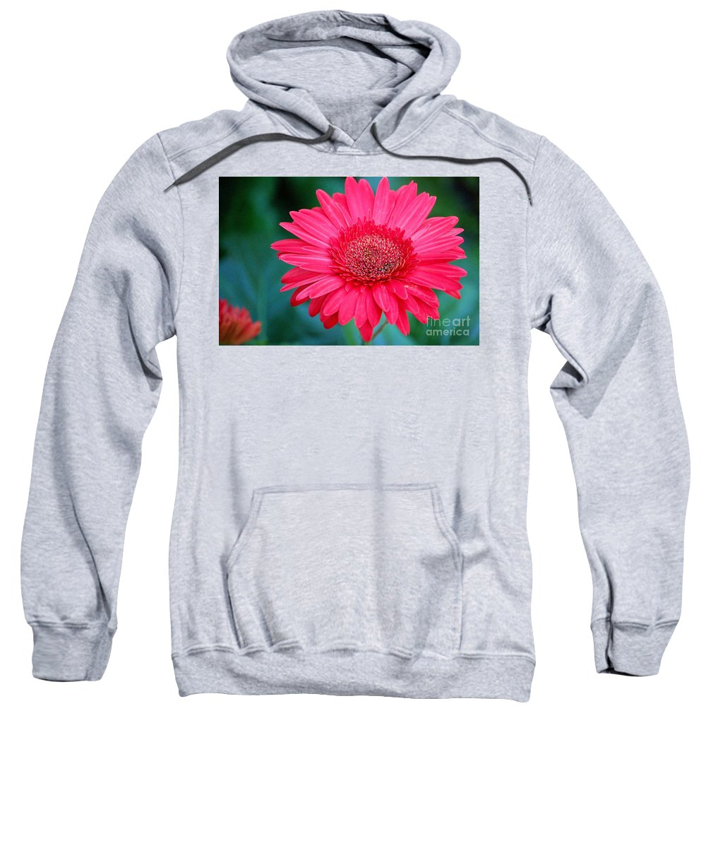 Gerber Daisy Sweatshirt featuring the photograph In The Pink by Debbi Granruth