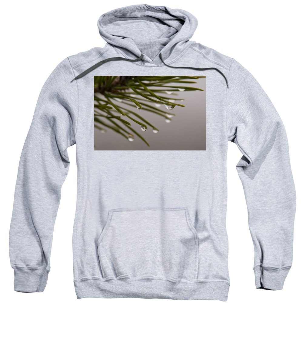 Pine Tree Needle Drop Droplet Reflection Rain Green Fog Foggy Nature Outdoors Hike Sweatshirt featuring the photograph In The Rain by Andrei Shliakhau