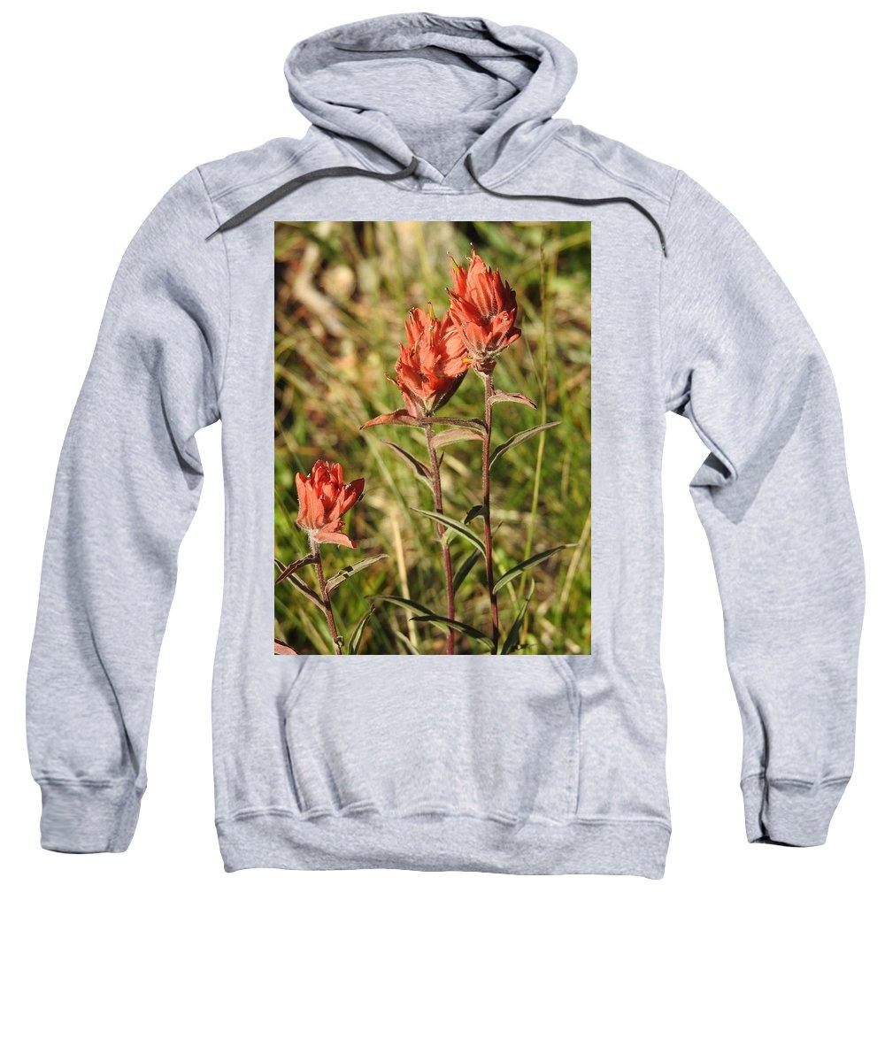 Colorado Sweatshirt featuring the photograph Indian Paintbrush, Colorado by Nicole Belvill