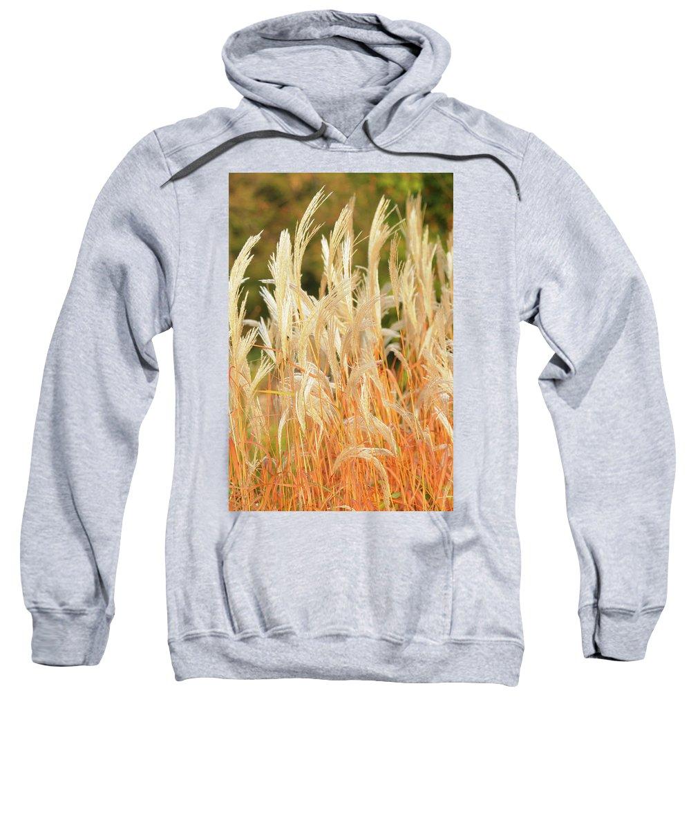 Wildlife Sweatshirt featuring the photograph Indiangrass by Lana Raffensperger