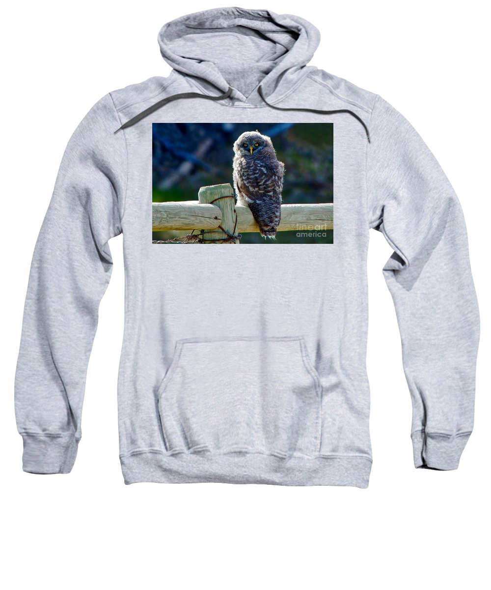 Great Grey Owl Sweatshirt featuring the photograph Intense Stare by James Anderson