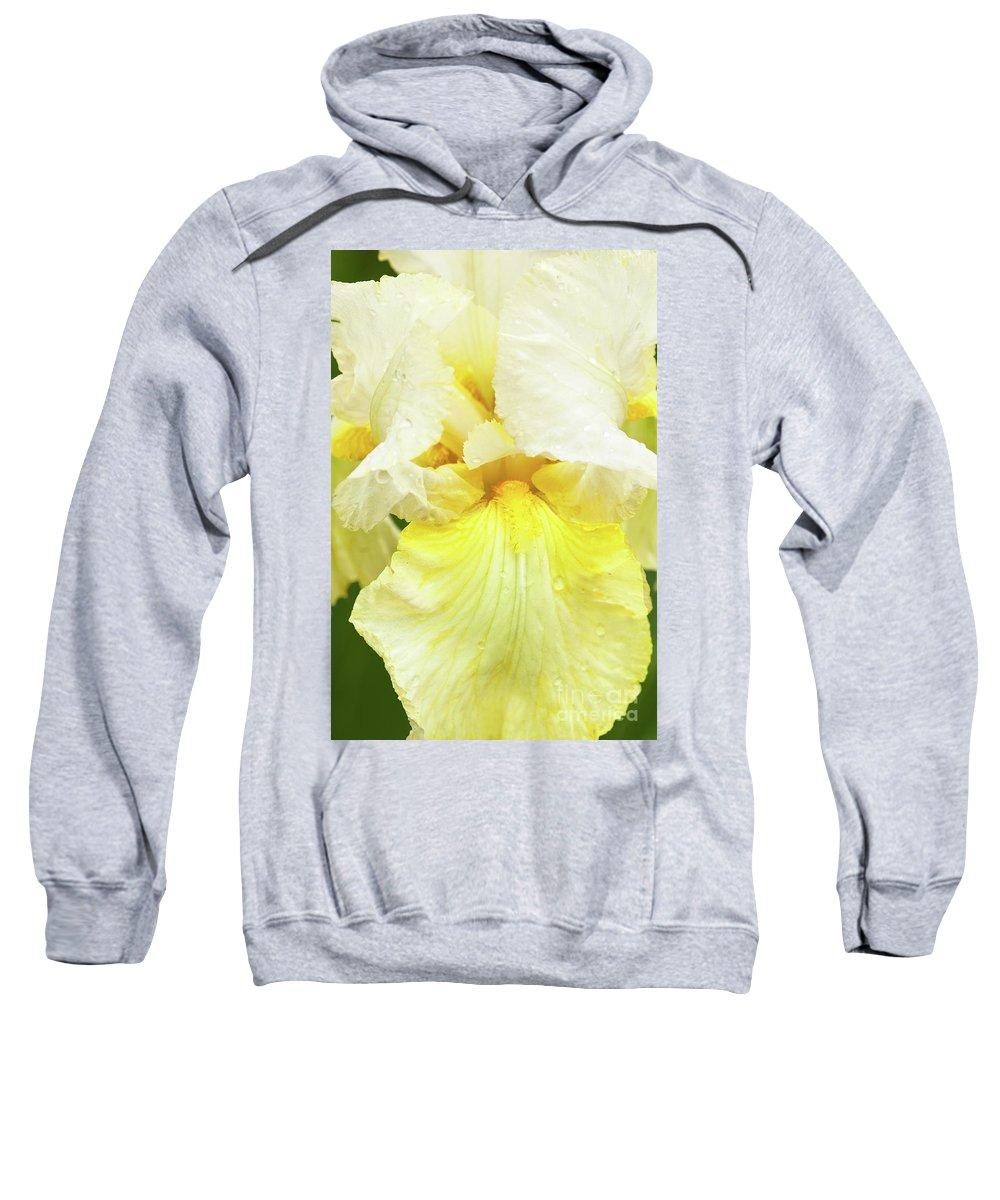 Iris Pride Of Ireland Sweatshirt featuring the photograph Iris Pride Of Ireland by Regina Geoghan