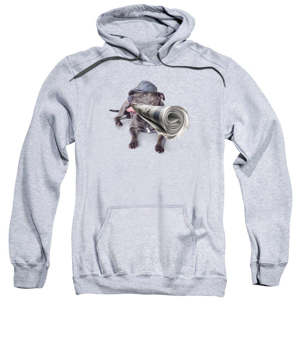 Bull Terrier Photographs Hooded Sweatshirts T-Shirts