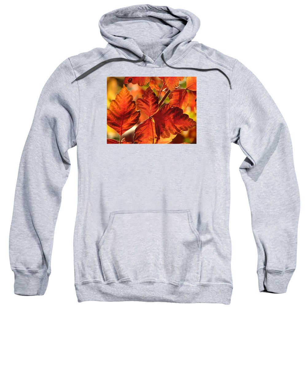 Photograph Sweatshirt featuring the photograph Jack Painted My Yard by J R Seymour